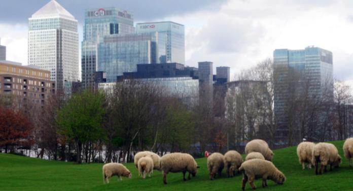 city farms ferme urbaine londres