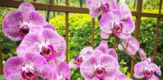 Kew Orchids Festival Londres