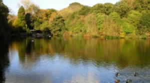 Les bassins du parc de Hampstead Heath