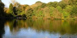 Les bassins du parc de Hampstead Heath