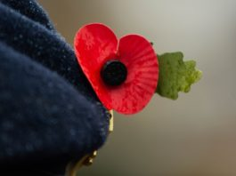 ou commémorer le 11 novembre remembrance day