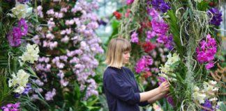 Kew Orchid Festival londres