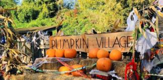 pumpkin patches halloween Londres